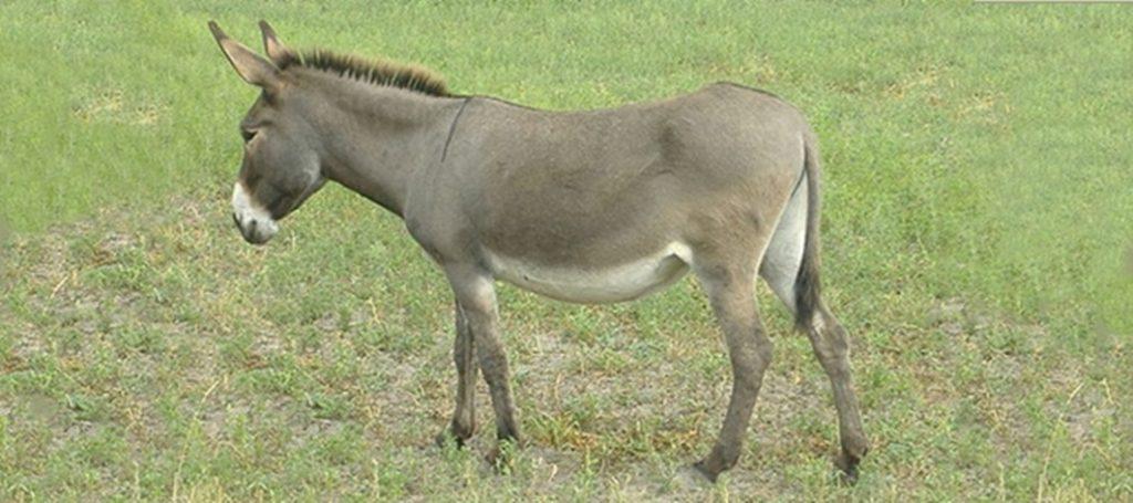 17 de dezembro – O burro