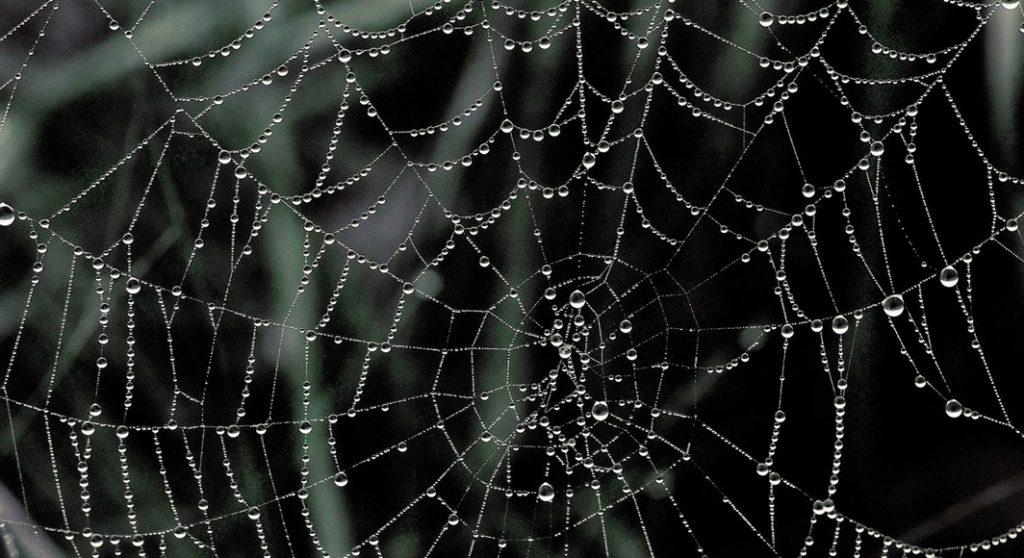 4 de dezembro – Teias de aranha